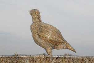 Straw Partridge