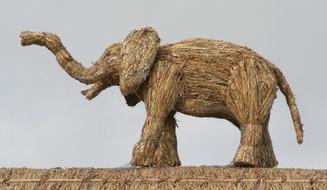 Straw Elephant