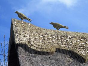 Straw Ravens