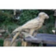 straw_parrot.jpg