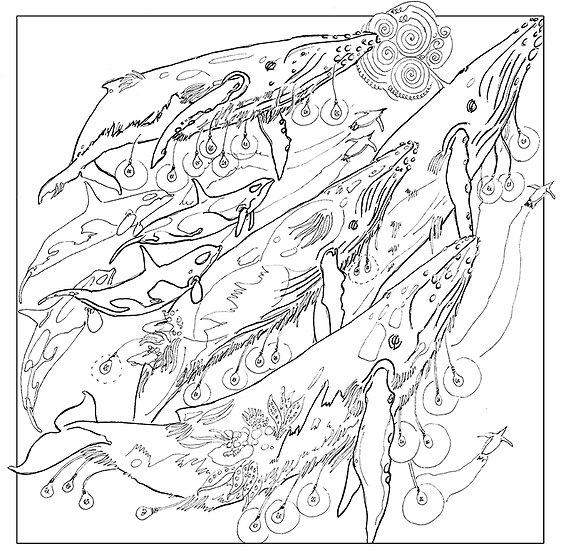 Humpbulb Whale Colouring Sheet