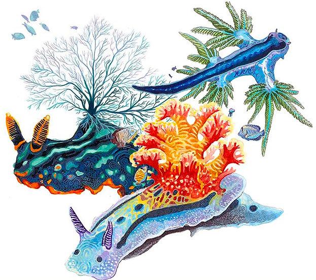Nudibranch - Set of 3