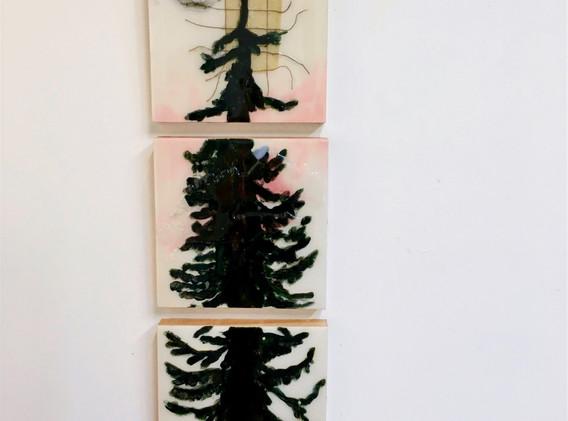 Joyous Cedar