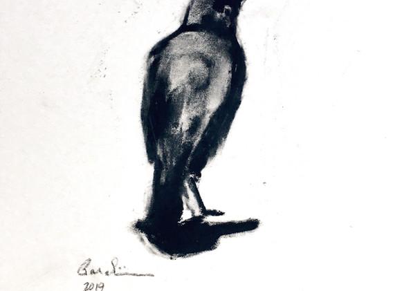 Juvenile Crow in Healing Garden