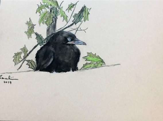 Baby Crow Asleep II
