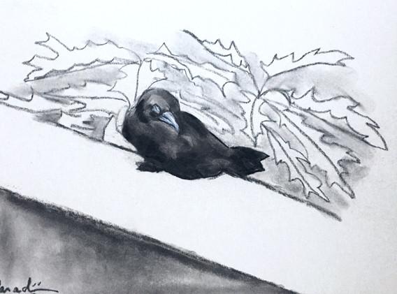 Baby Crow Asleep