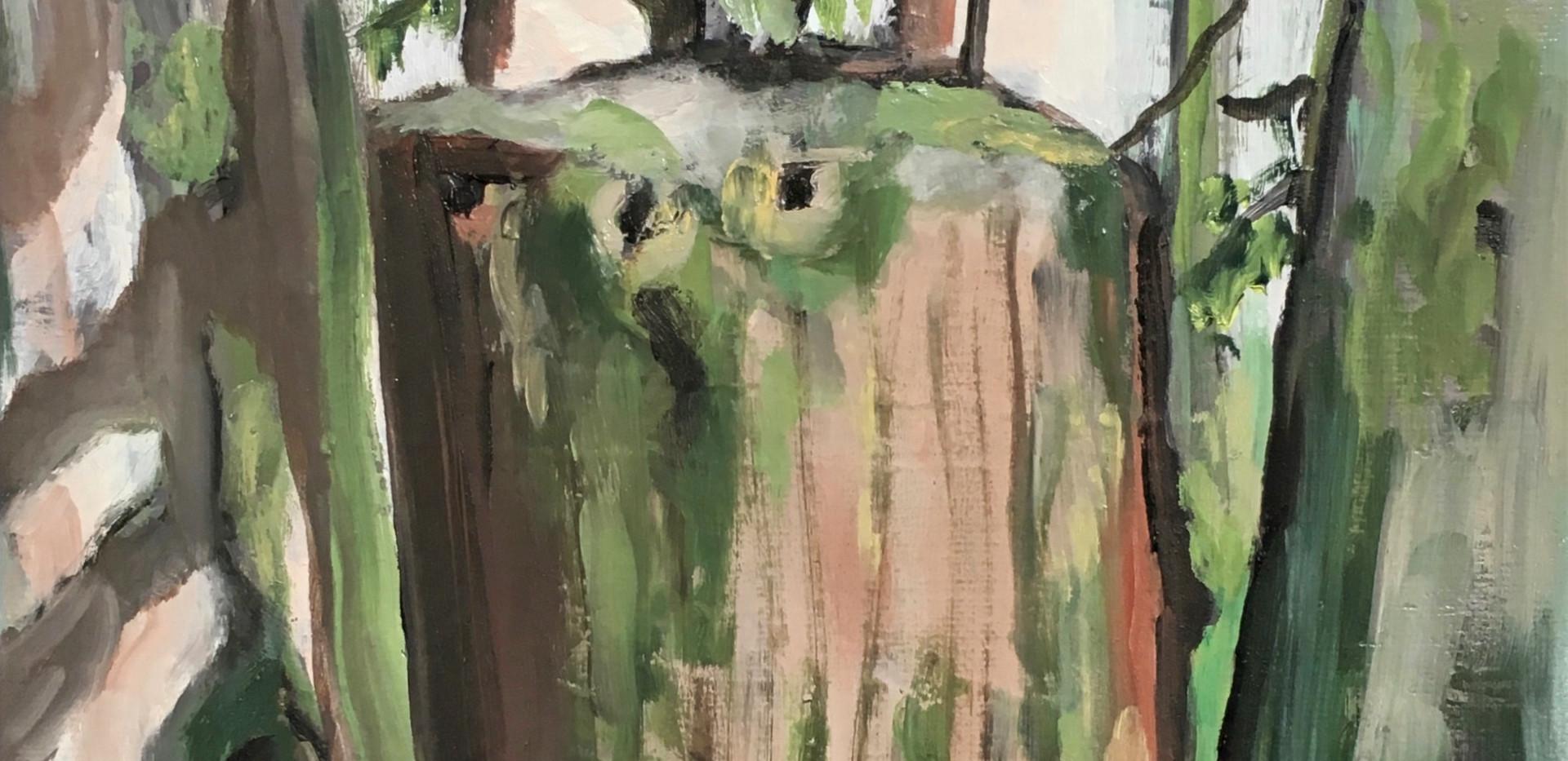 Siletz Old Growth Stump II