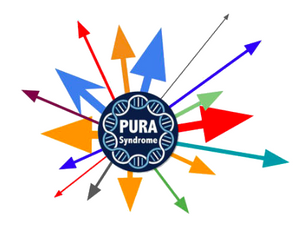 The PURA world is expanding