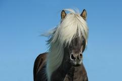 horse-1330690_640.jpg