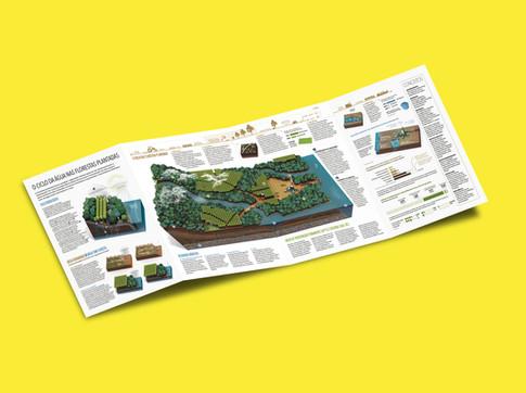 Ibá- Árvores plantadas e recursos hídricos