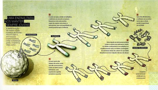 info-telomerase-edit.jpg