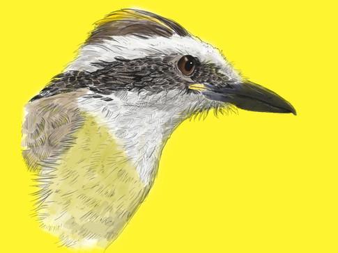 Mundo Estranho - Bico das aves