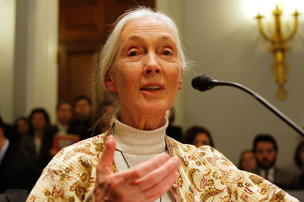 Jane Goodall at Senate hearing
