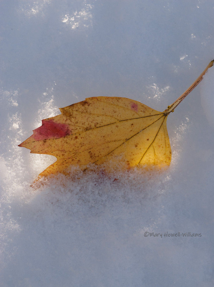 Fall_snow-11_15_42.jpg