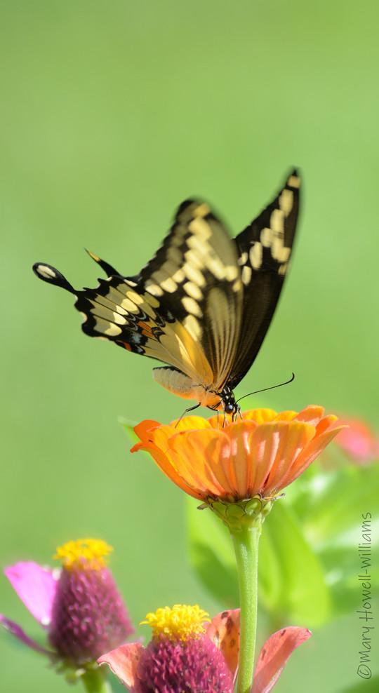 Flutter_01-07_16_056.jpg