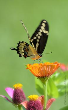 Flutter_02-07_16_054.jpg