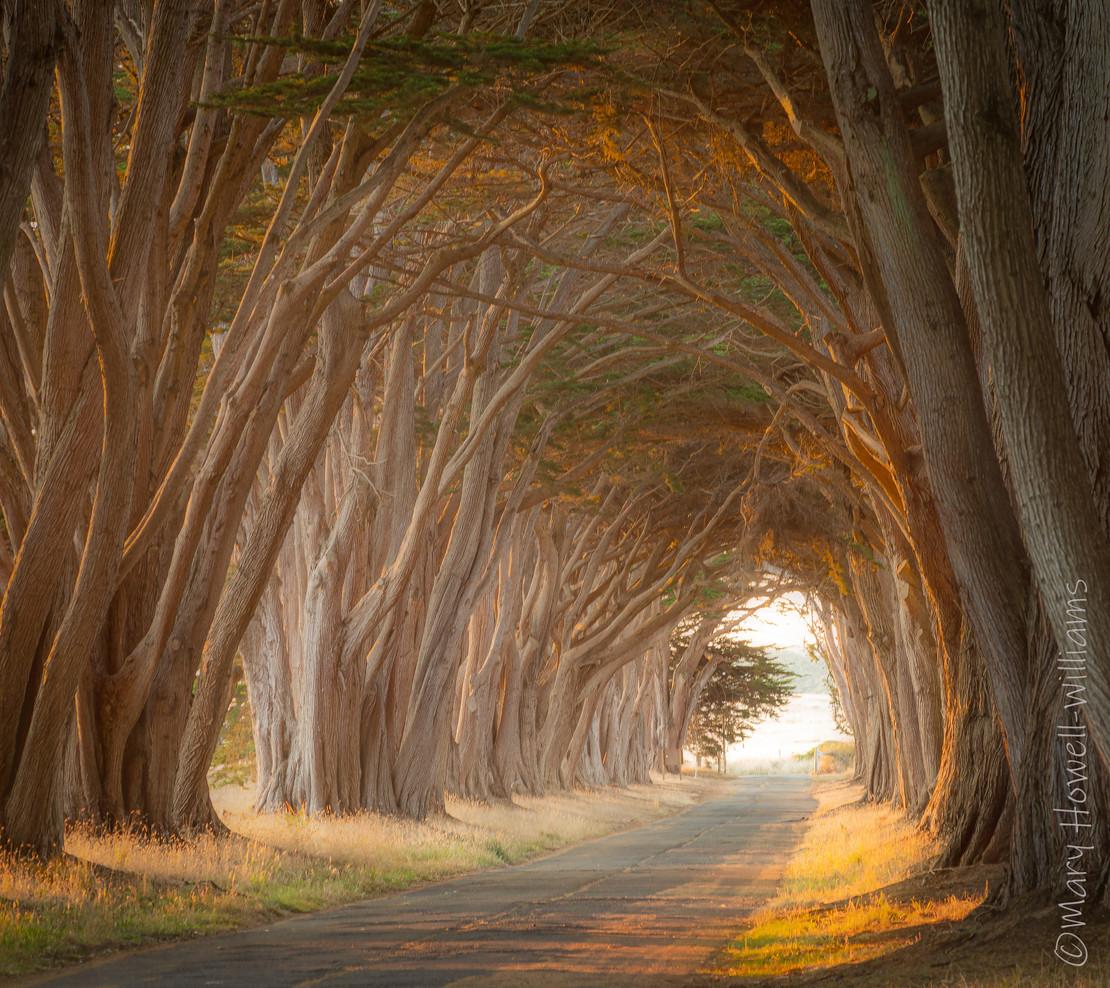 journey_CypressTunnel_PTReyes.jpg