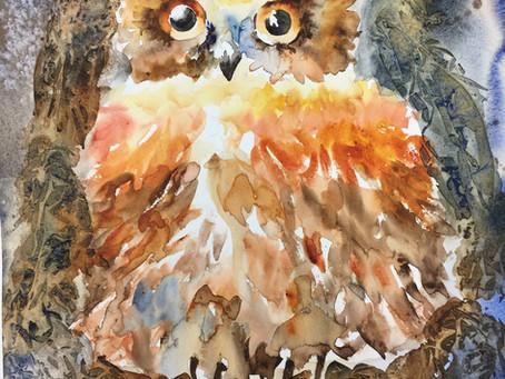 Winkle in Owl Bah-Wain!
