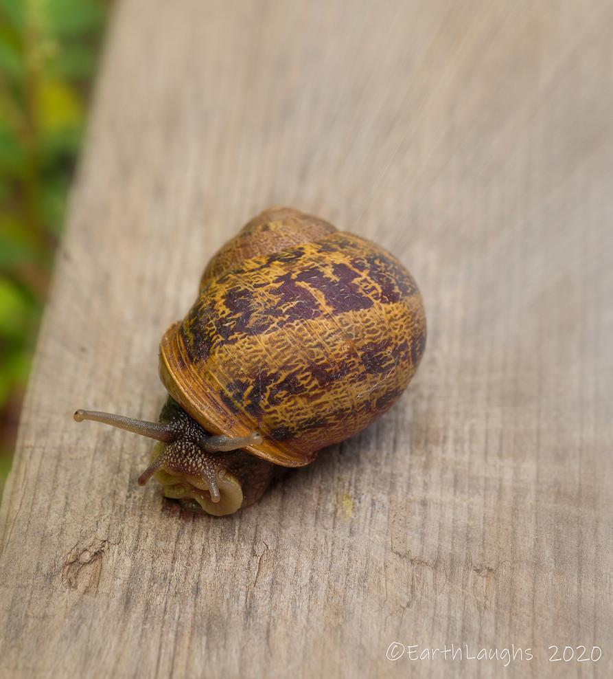 Snail_DSC9718-Edit.jpg