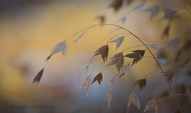 WinterLight&Shadow-12_18_35.jpg