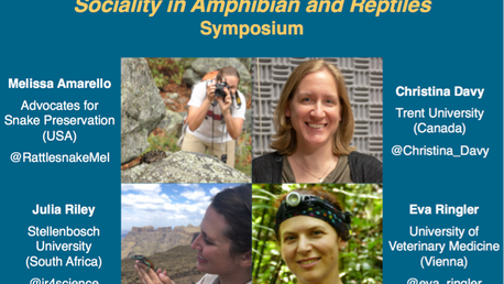 Sociality of Reptiles and Amphibians: WCH9 Symposium Edition