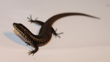 HOT OFF THE PRESS:              Roommates are not all they're cracked up to be (if you're a lizard)