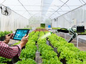 ¿Cómo aplico La Transformación Digital Exponencial si pertenezco al sector agroalimentario?