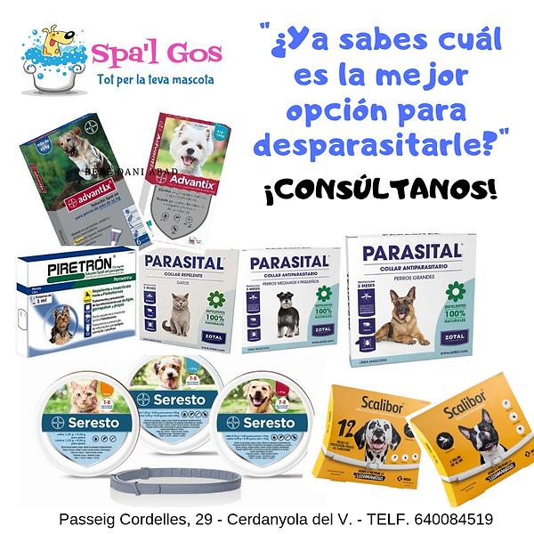 ertificado_de_Participación.png