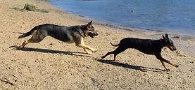 Dog walker Woolwich