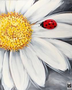 Daisy w ladybug
