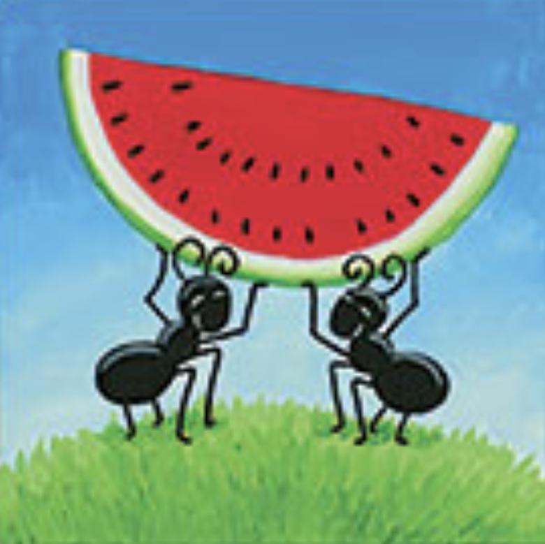 Watermelon Ants