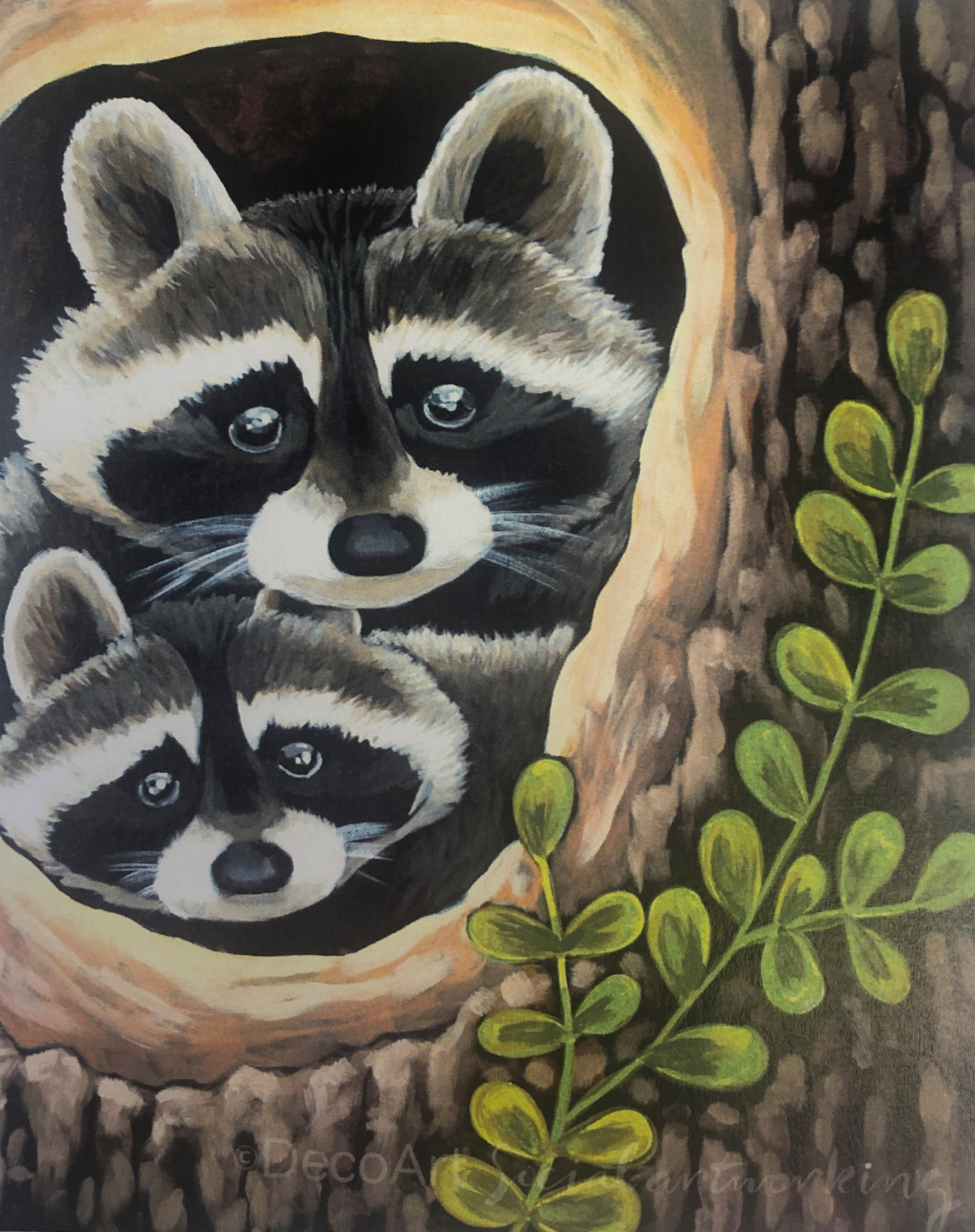 Curious Racoons