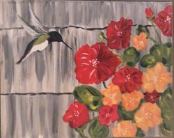 Nasturshim & Hummingbird