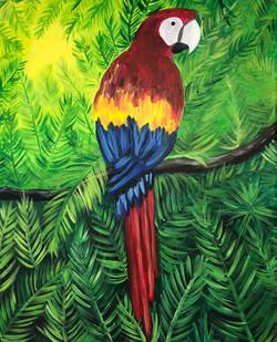 McCaw Parrot