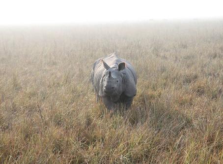 Turning into a rhinoceros