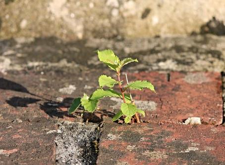 A rite of passage? Surviving writer's block