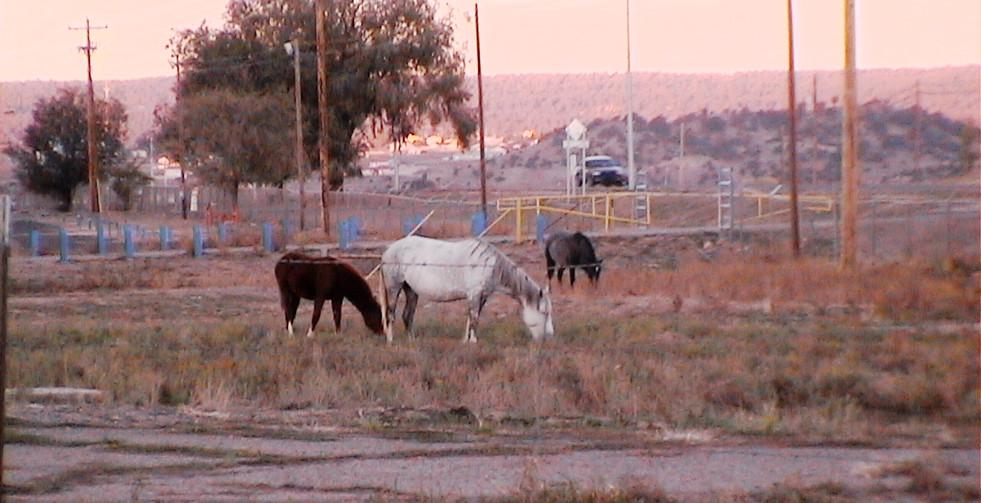 chevaux tranquilles libres