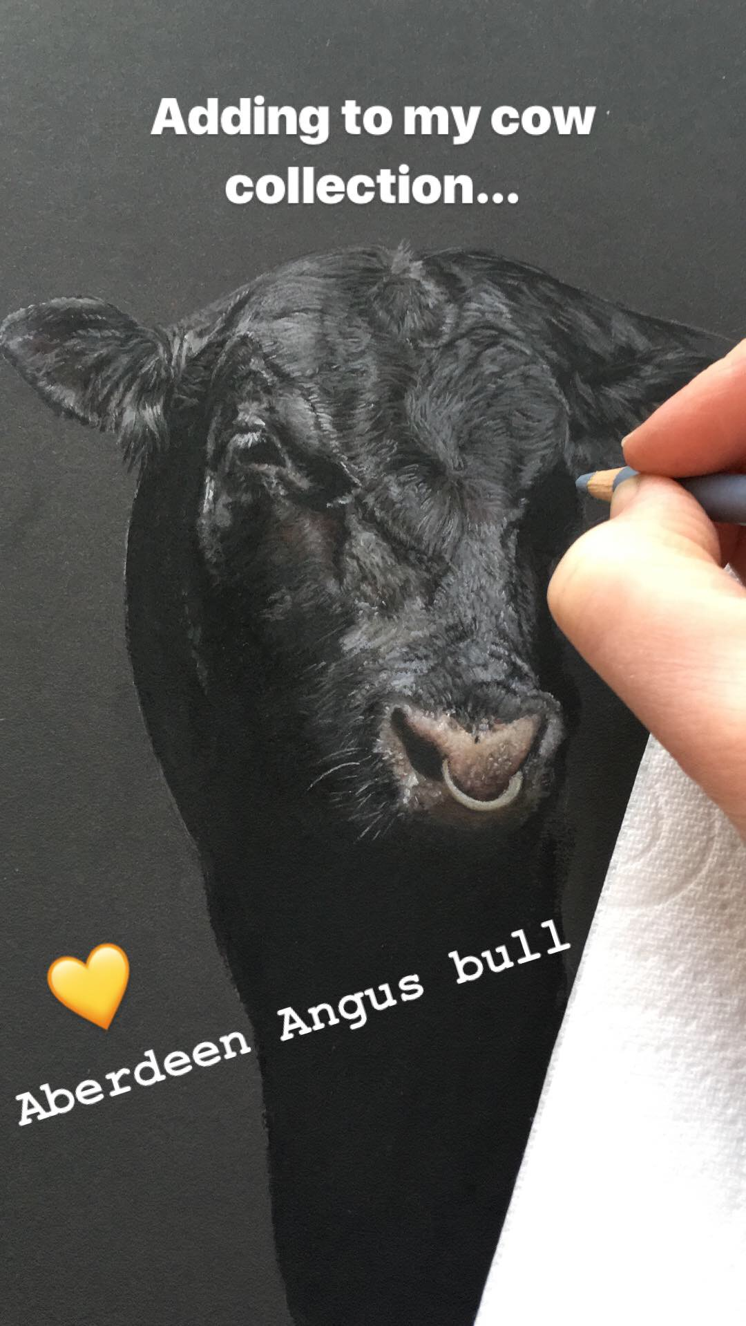 'Aberdeen Angus Bull' Pastel Drawing