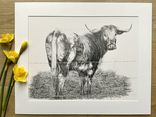 Longhorn Original A2 Pencil Drawing | 'Longhorn Cow'