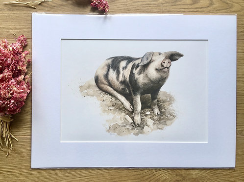 Gloucester old spot pig giclee Print | Happy as a pig in muck
