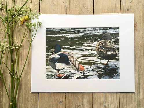 Drake and duck giclee print | Lazy river days