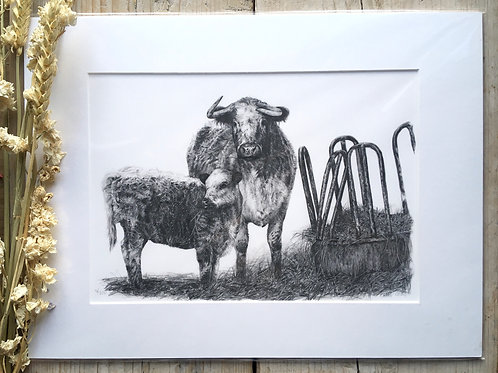 Longhorn cattle giclee print | Longhorn and calf