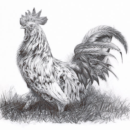 Cockerel giclee print | Standing tall