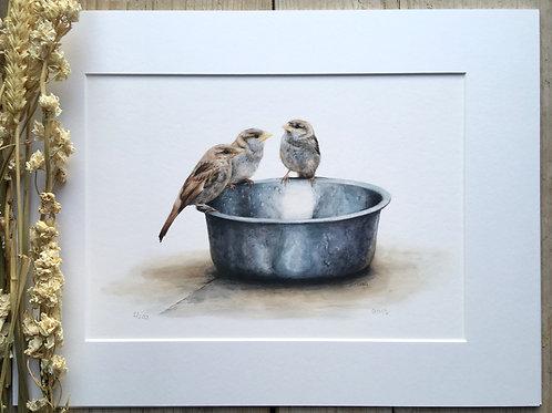 House sparrow gicleé print | Breakfast with Angus