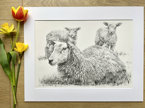 Sheep original pencil drawing | 'Springtime is here'