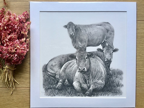'Limousin Cattle' Giclee print