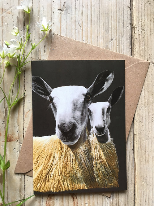 Bluefaced Leicester sheep greeting card 'Double trouble'