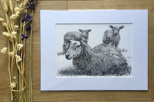 Sheep giclee print | 'Springtime is here'