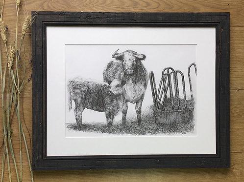 Longhorn cattle original pencil drawing |Longhorn and calf