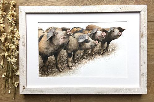 Gloucester old spot original watercolour | Pinky, perky, porky and pie